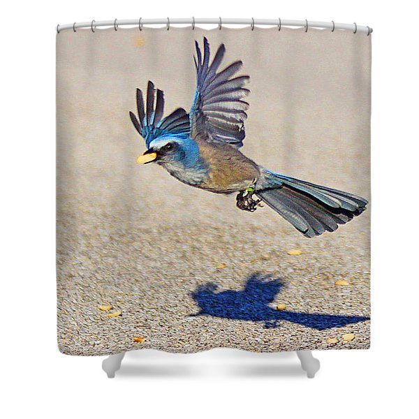 Florida Scrub Jay Shower Curtain
