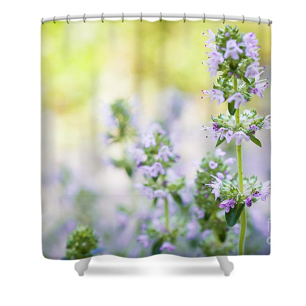 Flowering Thyme Shower Curtain