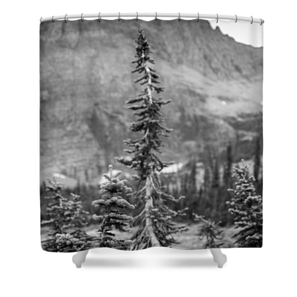 Gnarled Pines Shower Curtain