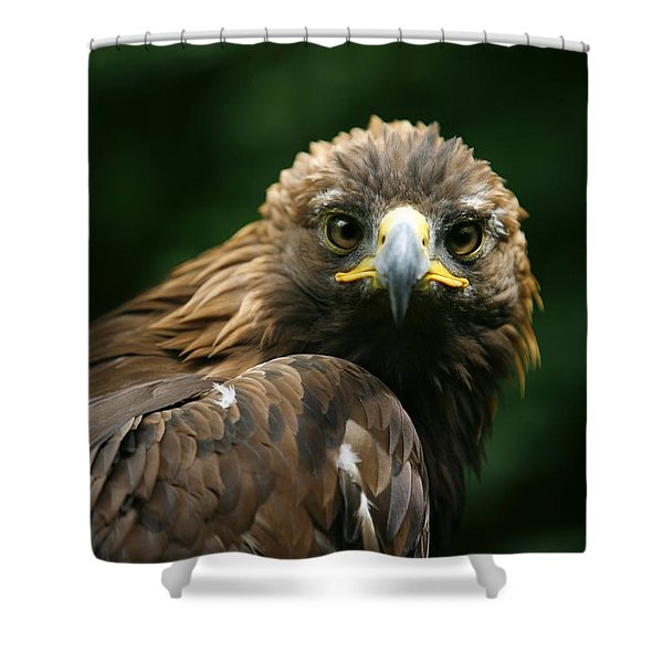 Golden Eagles Face Aquila Chrysaetos Shower Curtain