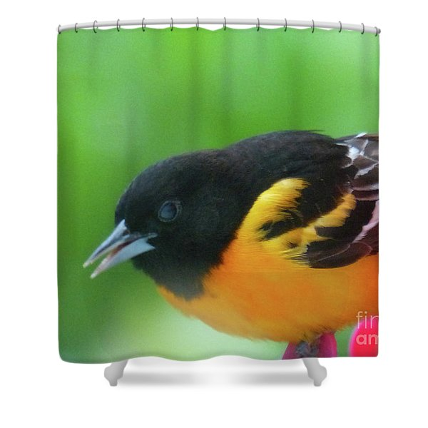 Good Morning Mr. Oriole Shower Curtain