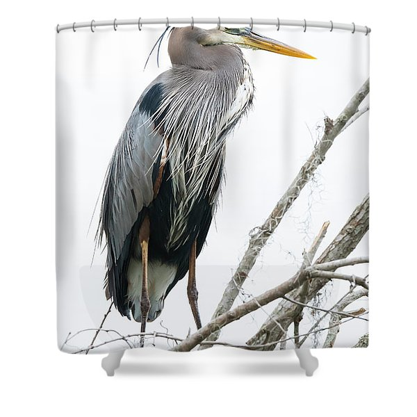 Great Blue Heron Shower Curtain