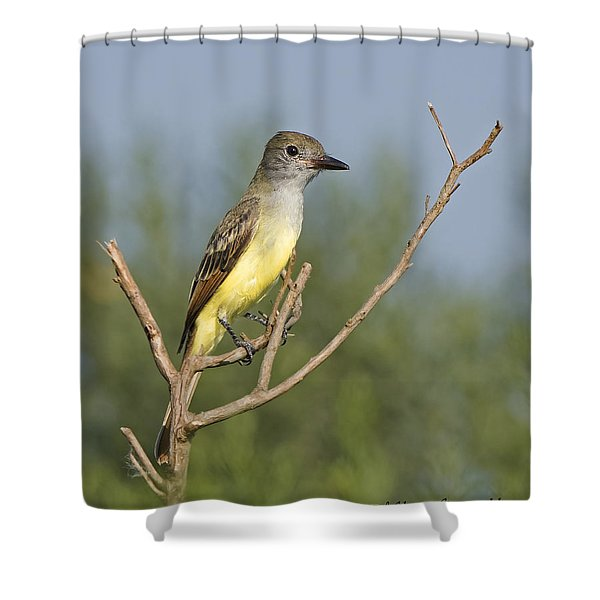 Great Crested Flycatcher Shower Curtain