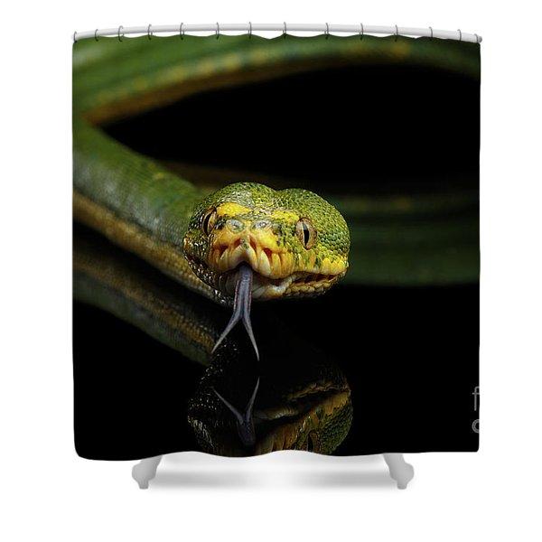 Green Tree Python. Morelia Viridis. Isolated Black Background Shower Curtain