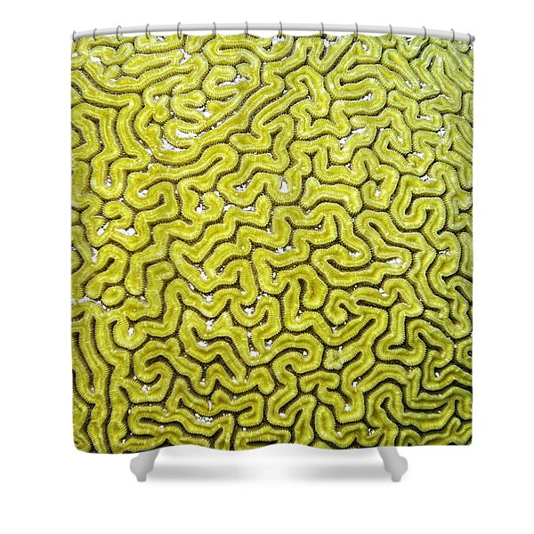 Shower Curtain featuring the photograph Grooved Brain Coral by Perla Copernik