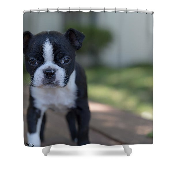 Harley As A Puppy Shower Curtain