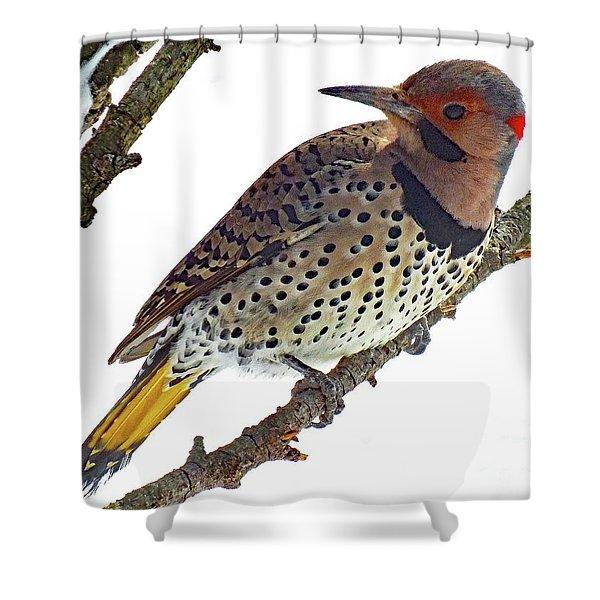 Hello Gorgeous Northern Flicker Shower Curtain
