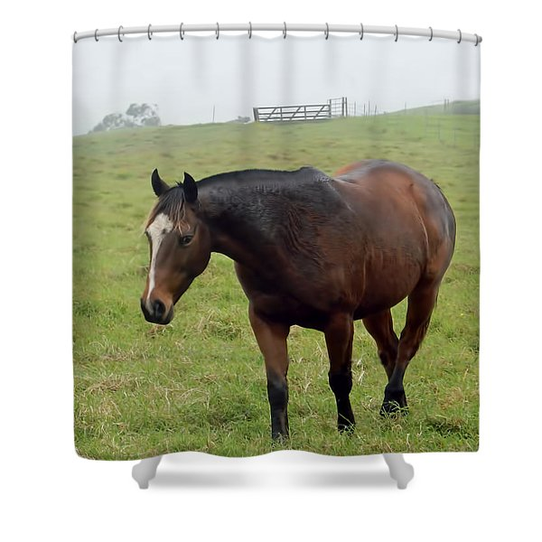 Horse In The Fog Shower Curtain
