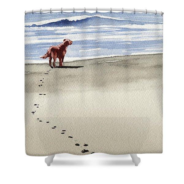 Irish Setter At The Beach Shower Curtain