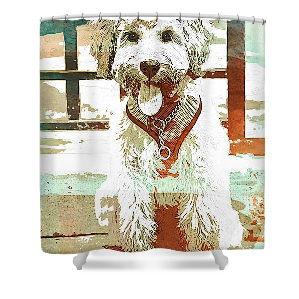 Labradoodle-wc 2 Shower Curtain