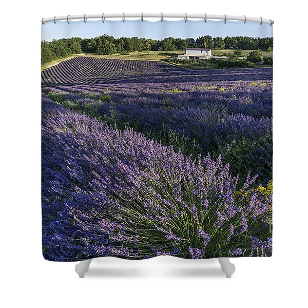 Shower Curtain featuring the photograph Lavender Field Provence  by Juergen Held