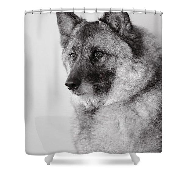 Dog Loki Shower Curtain