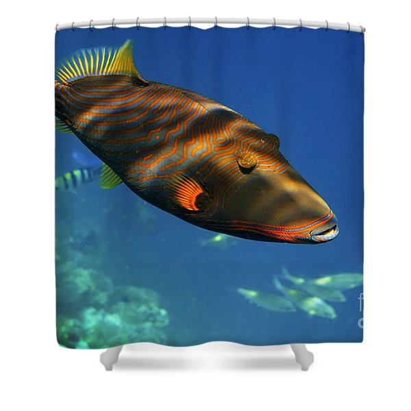 Shower Curtain featuring the photograph Maldives by Juergen Held