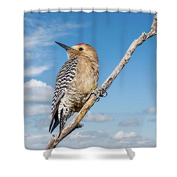 Male Gila Woodpecker Shower Curtain