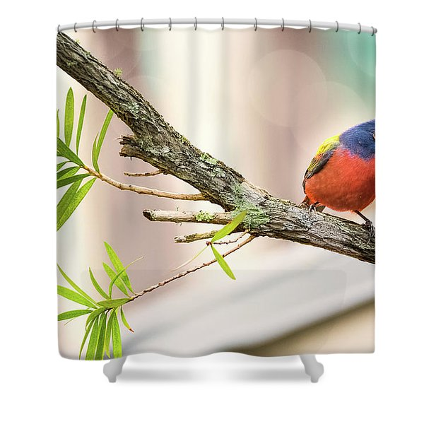 Male Painted Bunting Shower Curtain