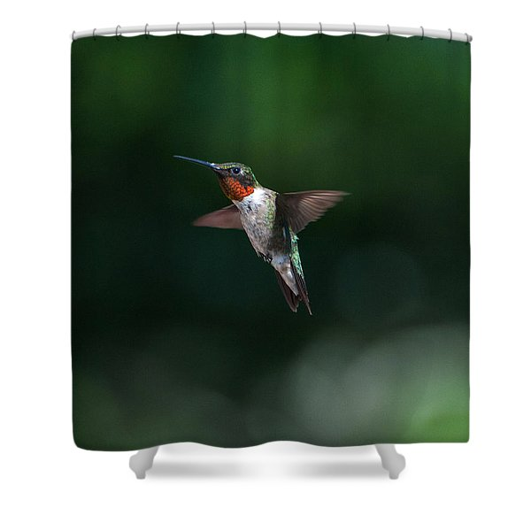 Male Ruby Throated Hummingbird Shower Curtain
