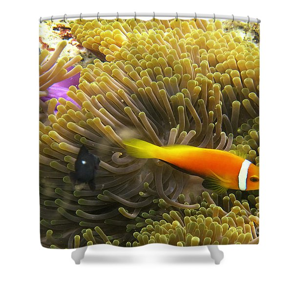 Shower Curtain featuring the photograph Maledives Clown Fish by Juergen Held