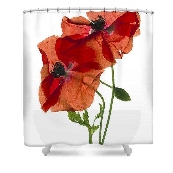 Margie's Poppy Duo Shower Curtain