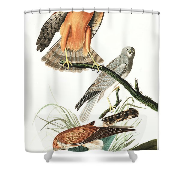 Marsh Hawk Shower Curtain