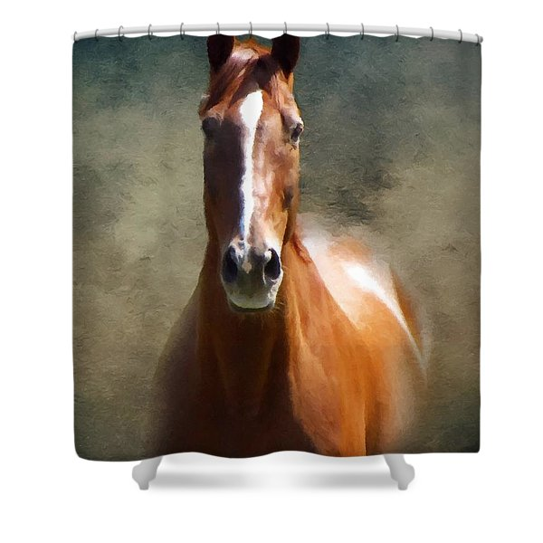 Misty In The Moonlight P D P Shower Curtain