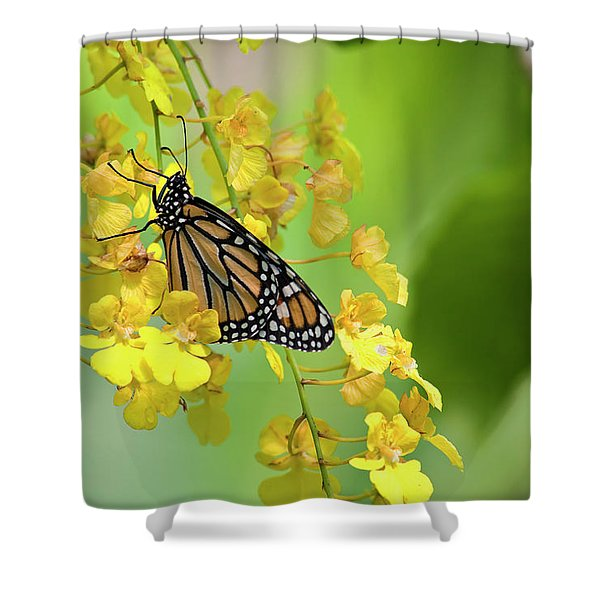Monarch Butterfly On Yellow Orchids Shower Curtain