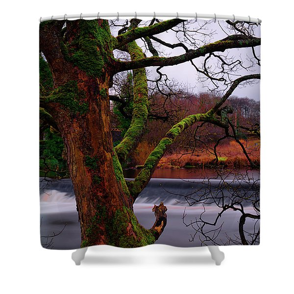Mossy Tree Leaning Over The Smooth River Wharfe Shower Curtain