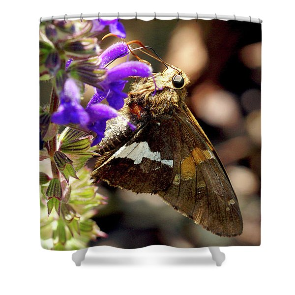 Shower Curtain featuring the photograph Moth Snack by Meta Gatschenberger