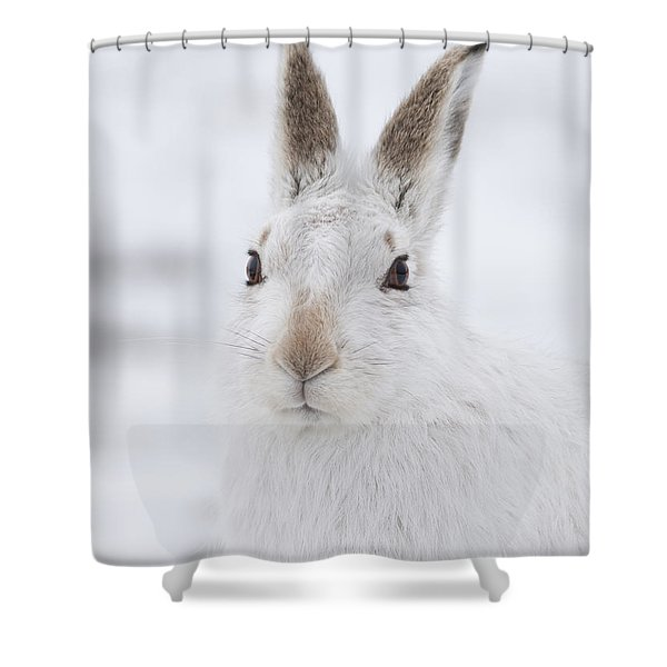 Mountain Hare In The Snow - Lepus Timidus  #1 Shower Curtain