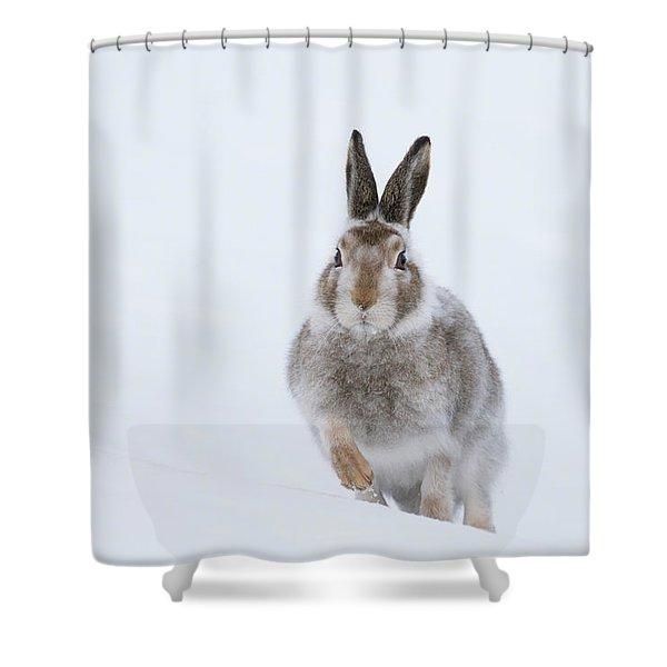 Mountain Hare - Scotland Shower Curtain