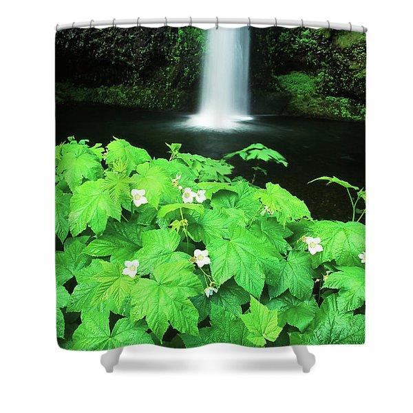 Multnoma Falls Shower Curtain