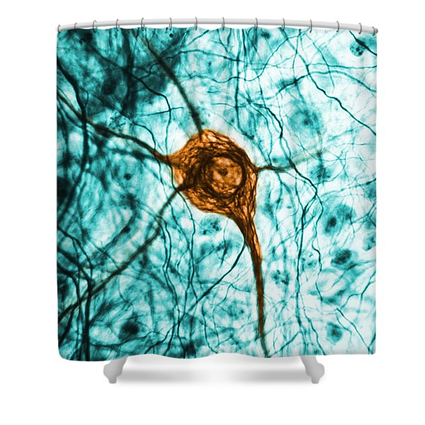 Neuron, Tem Shower Curtain