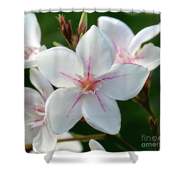 Oleander Harriet Newding  2 Shower Curtain