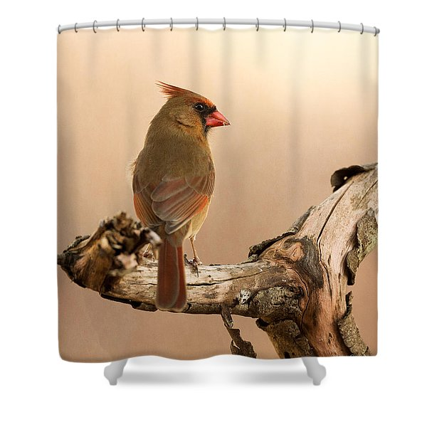 One Last Look Shower Curtain