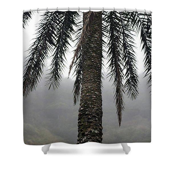 Palm, Koolau Trail, Oahu Shower Curtain