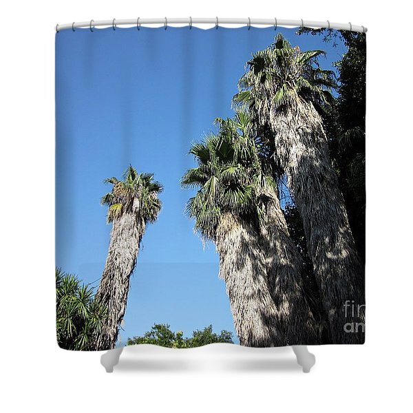 Palm Trees In Torremolinos Shower Curtain