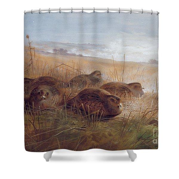 Partridges Shower Curtain