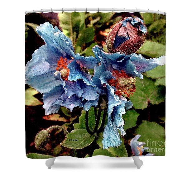 Pavot Bleu // Meconopsis Betonicifolia 2 // Blue Poppy Shower Curtain