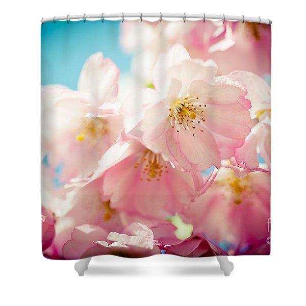 Pink Cherry Blossoms Closeup Shower Curtain