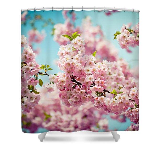 Shower Curtain featuring the photograph Pink Cherry Blossoms Sakura by Raimond Klavins