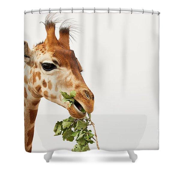 Portrait Of A Rothschild Giraffe  Shower Curtain