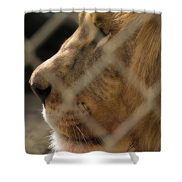 Profile Of A King Shower Curtain