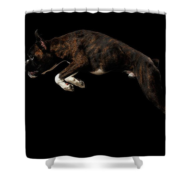 Shower Curtain featuring the photograph Purebred Boxer Dog Isolated On Black Background by Sergey Taran