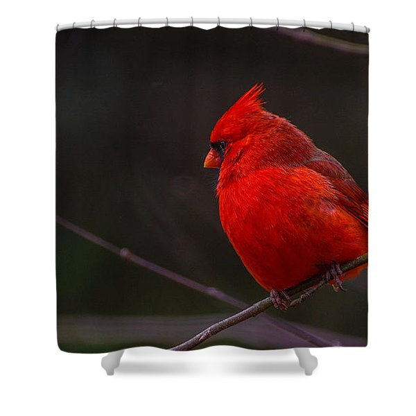 Quality Quiet Time  Shower Curtain