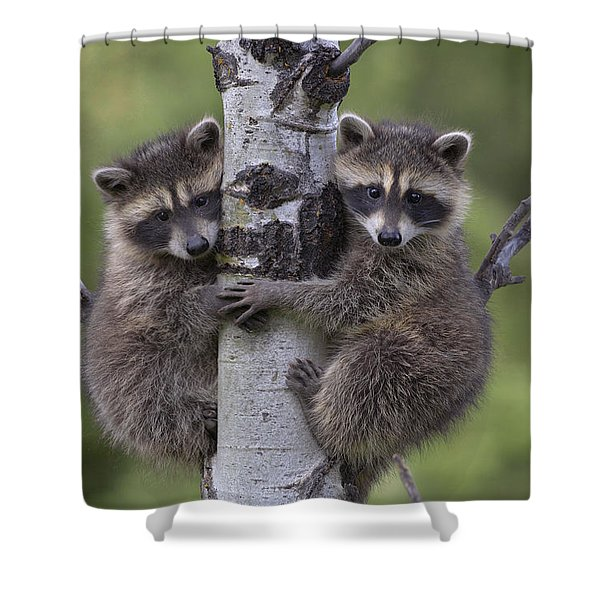 Raccoon Two Babies Climbing Tree North Shower Curtain
