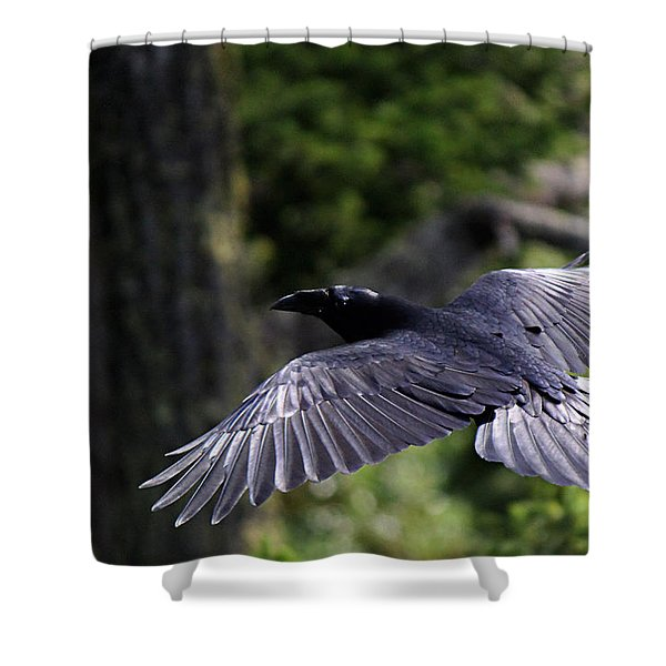 Raven Flight Shower Curtain