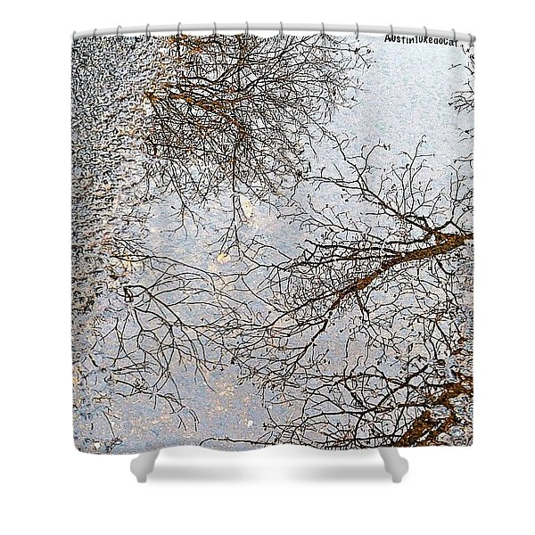 #reflection Of #tree #branches In A Shower Curtain