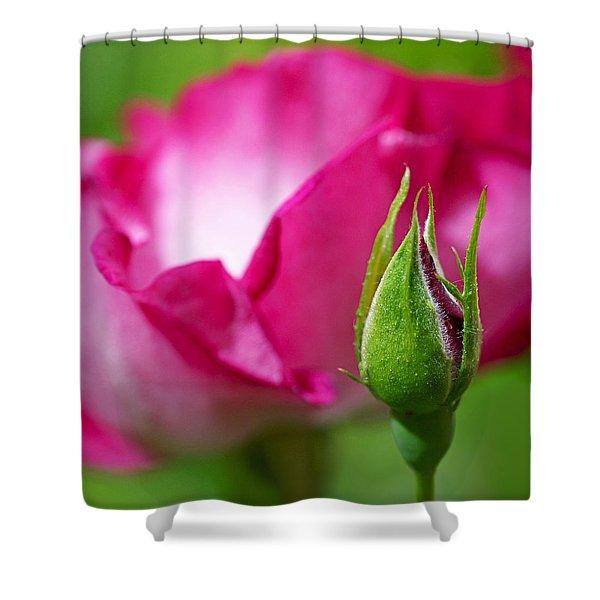 Budding Rose Shower Curtain