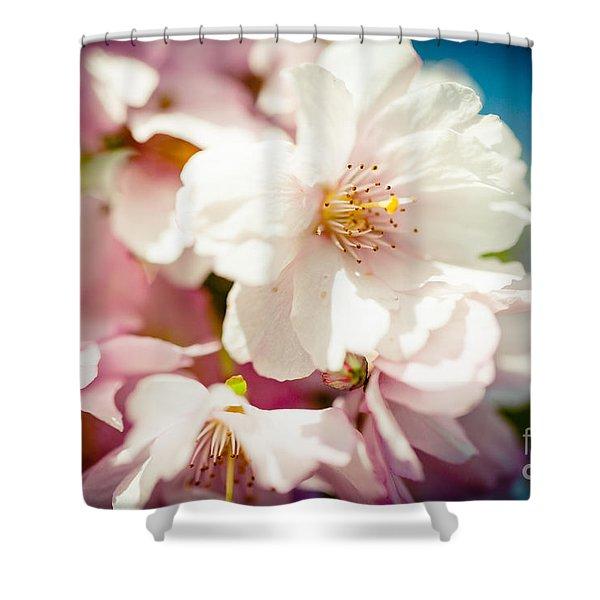 Shower Curtain featuring the photograph Sakura Blossoms Pink Cherry Artmif.lv by Raimond Klavins