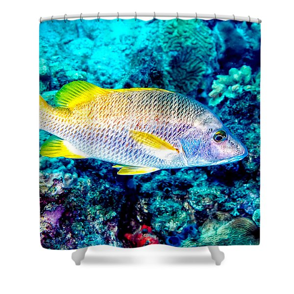 Schoolmaster Snapper Shower Curtain