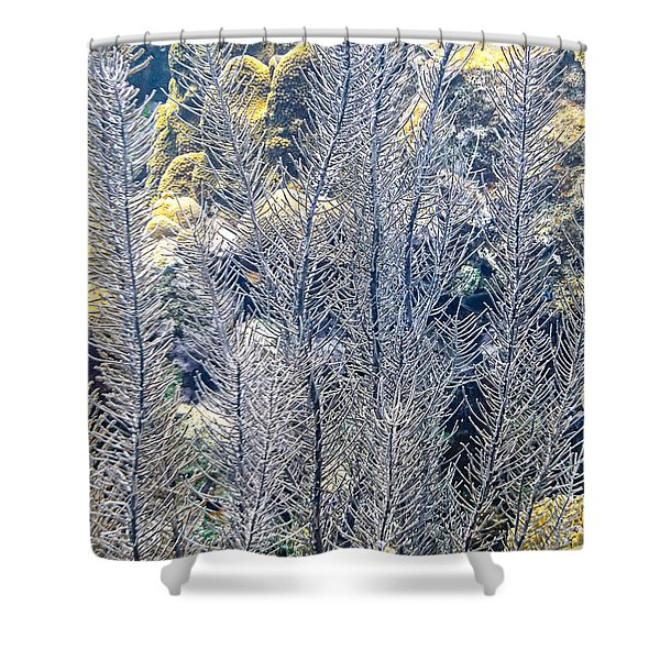 Shower Curtain featuring the photograph Sea Plumes Coral by Perla Copernik